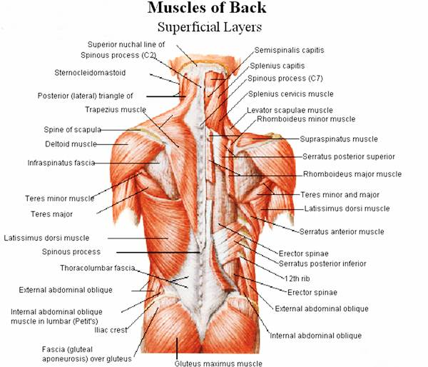 how to build your muscles in a month