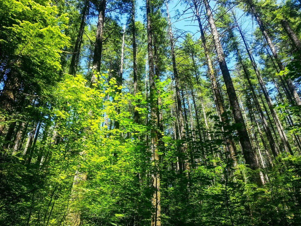 rattlesnake ridge trail is lined with beautiful trees