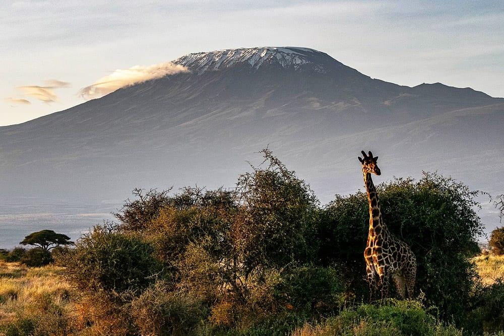 climbing mt. kilimanjaro with a giraffe