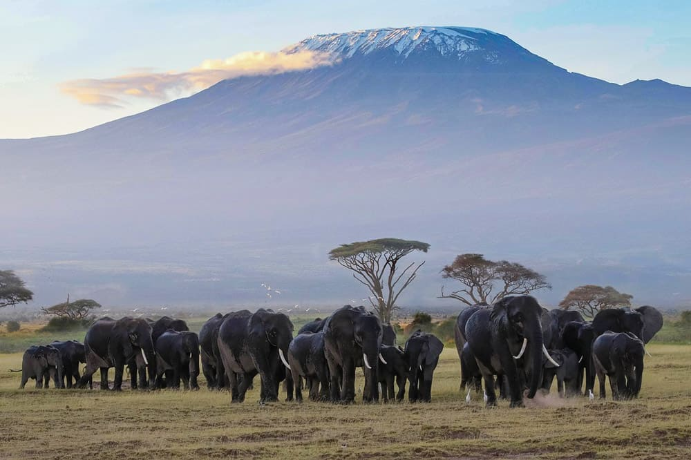 Mt Kilimanjaro with elephants