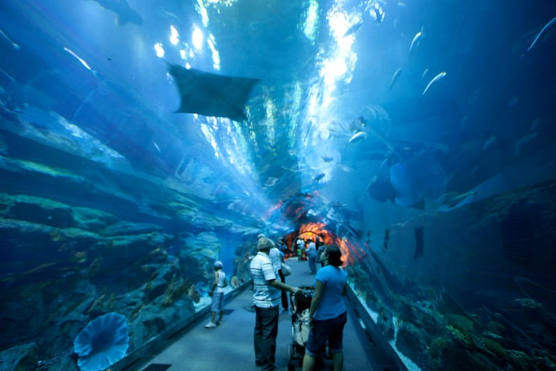 tunnel view underwater of dubai aquarium and underwater zoo